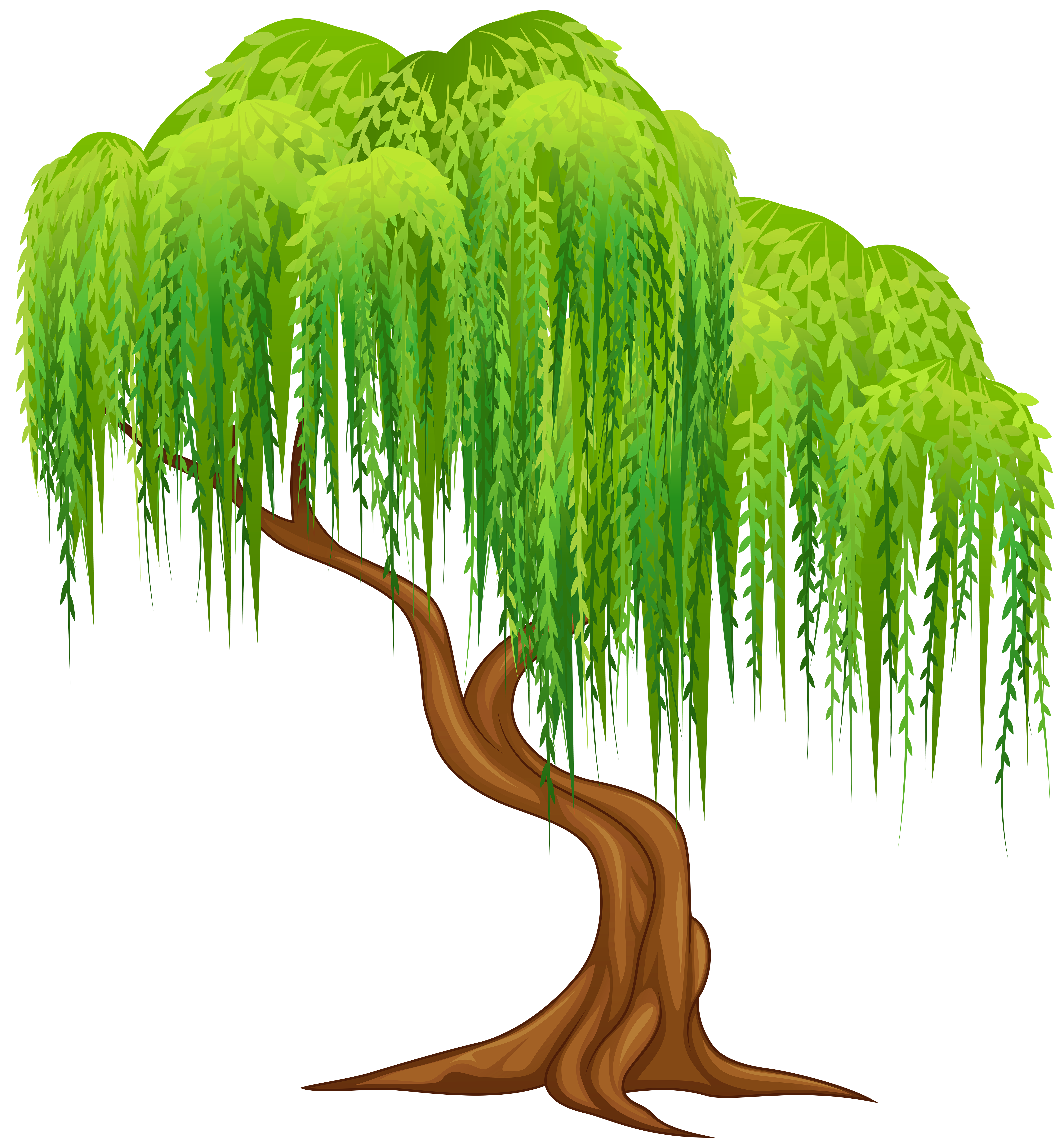 Weeping willow Tree Wall decal Clip art.