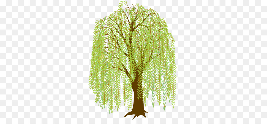 Weeping Willow Tree Drawing clipart.