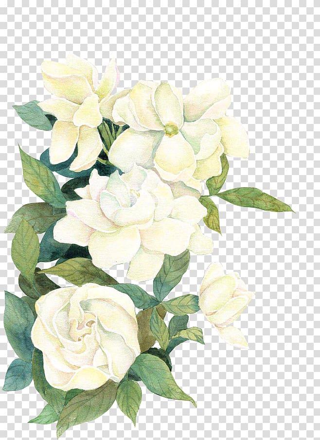 Flower If(we), flower, white flowers illustration transparent.