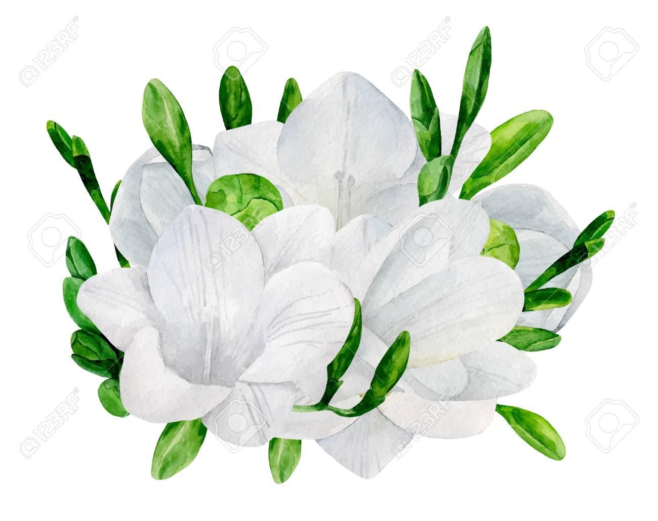 Watercolor wedding freesia bouquet vector clip art. White flowers.
