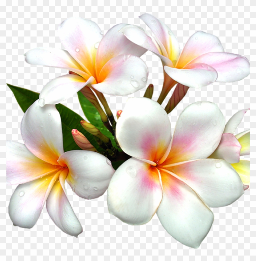 White Flower Clipart White Flower Png Gallery Free.