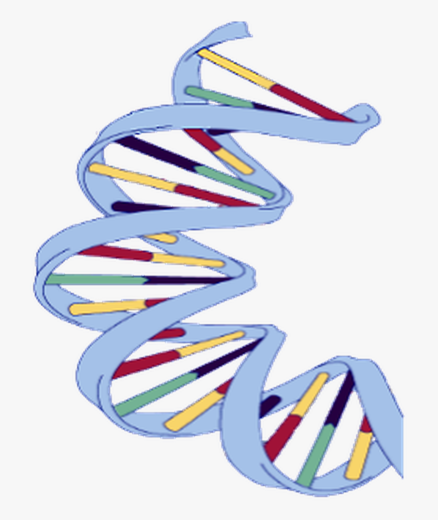 Dna Structure Clipart Wikipedia.