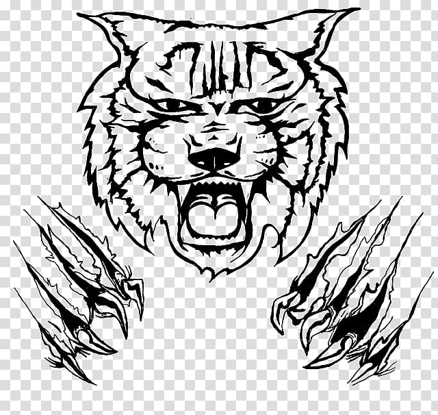 Wildcat Drawing , Cat transparent background PNG clipart.
