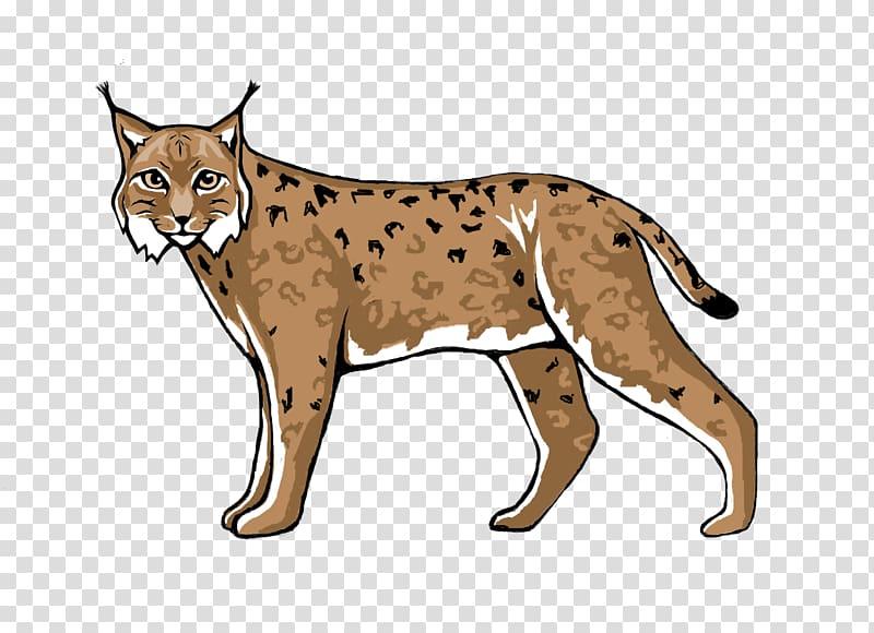 Wildcat Lynx Cougar Cheetah, lynx transparent background PNG.