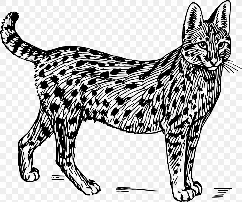 Savannah Cat Wildcat Serval Felidae Clip Art, PNG.