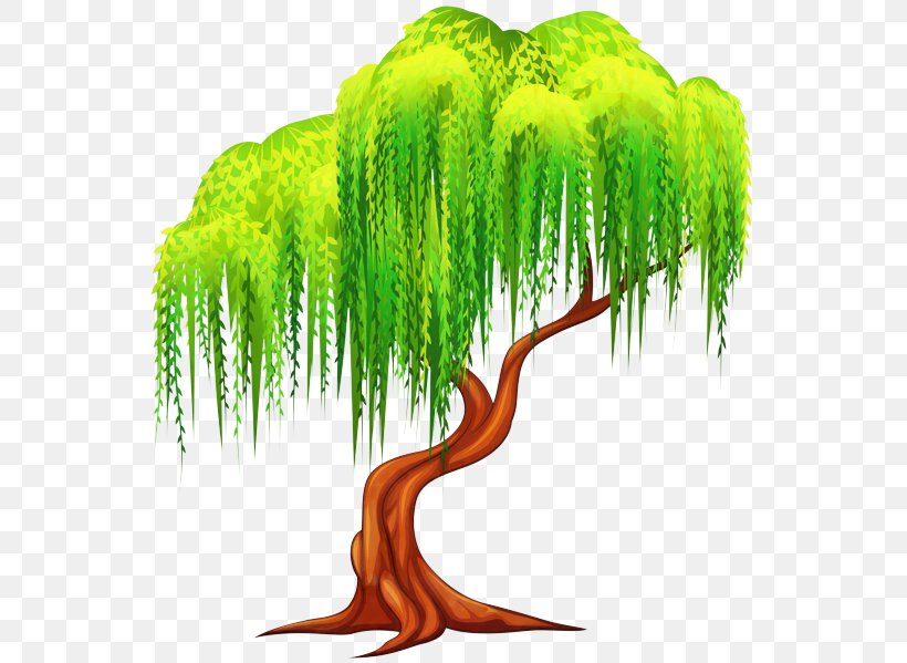 Tree Weeping Willow Clip Art Illustration Plants, PNG.