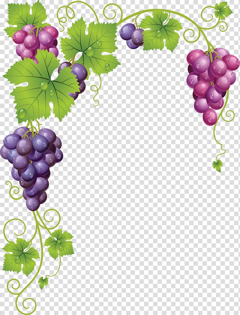 Grapevines Grape leaves Wine, Grapes transparent background.