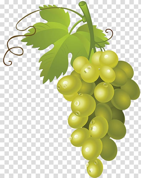 White wine Muscat Grape , grape transparent background PNG.