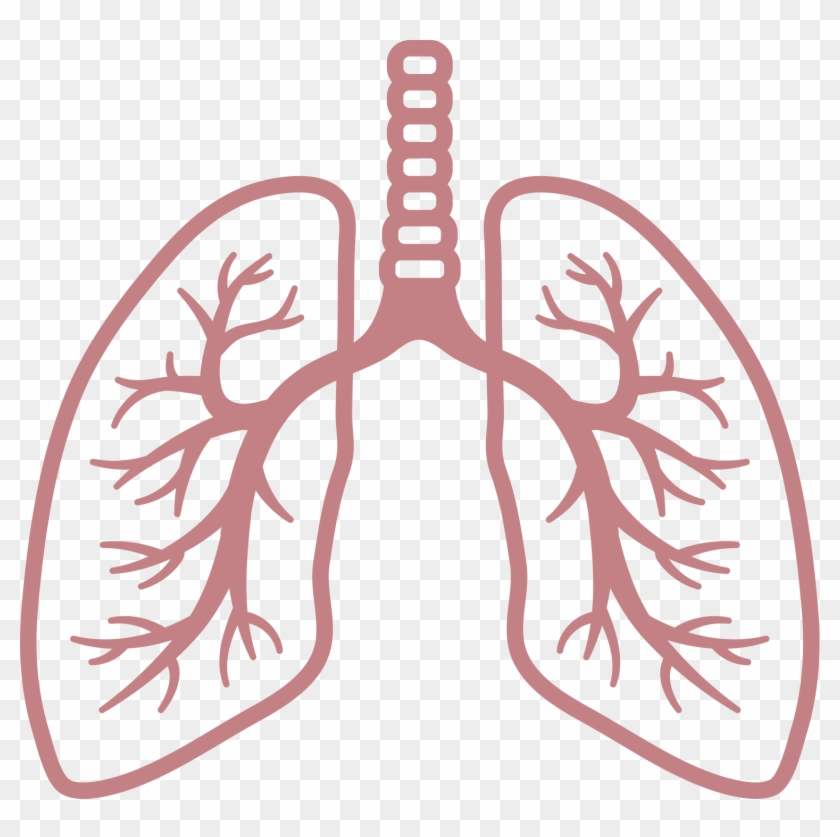 Lungs Clipart No Background, HD Png Download.