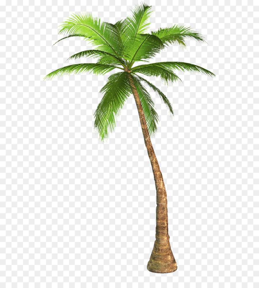 Palm Tree Backgroundtransparent png image & clipart free download.