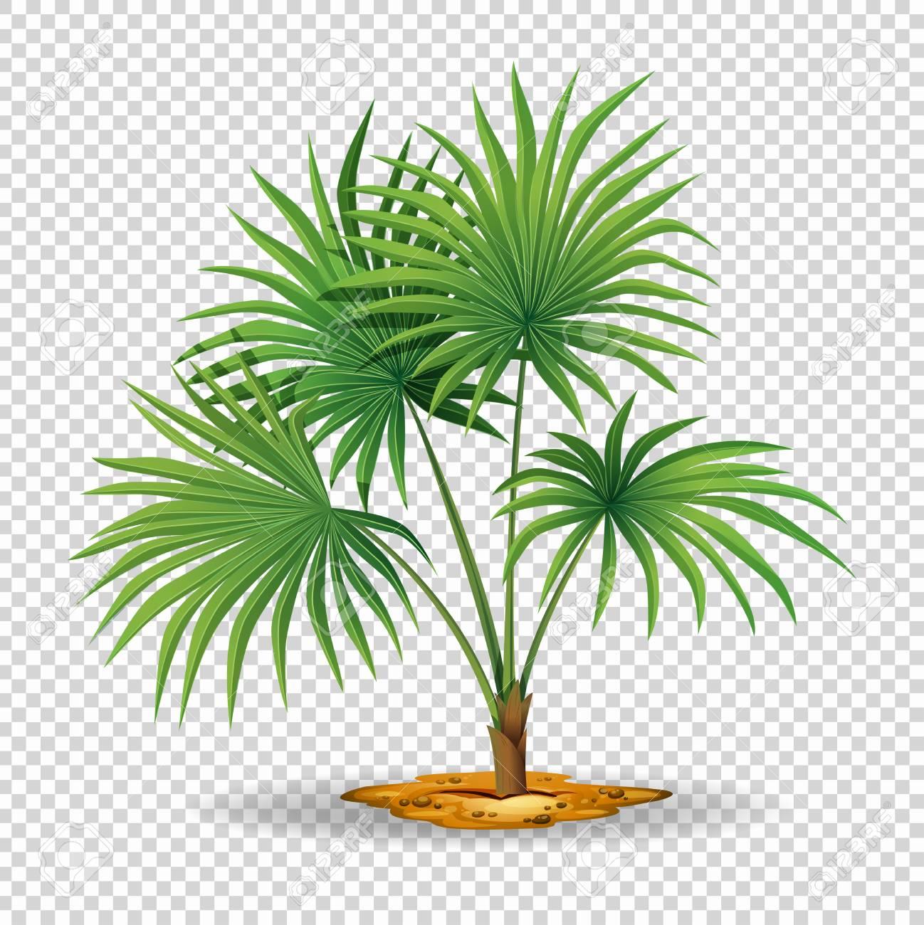 Palm tree on transparent background illustration.