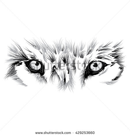 Wolf Eyes Stock Images, Royalty.