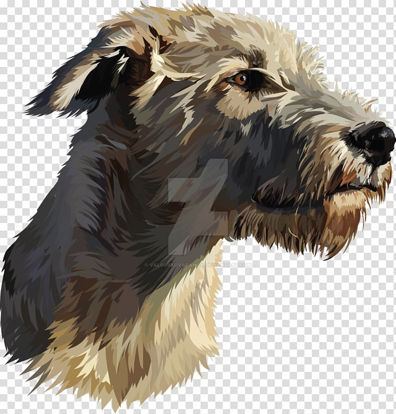 Glen of Imaal Terrier Irish Wolfhound Scottish Deerhound.