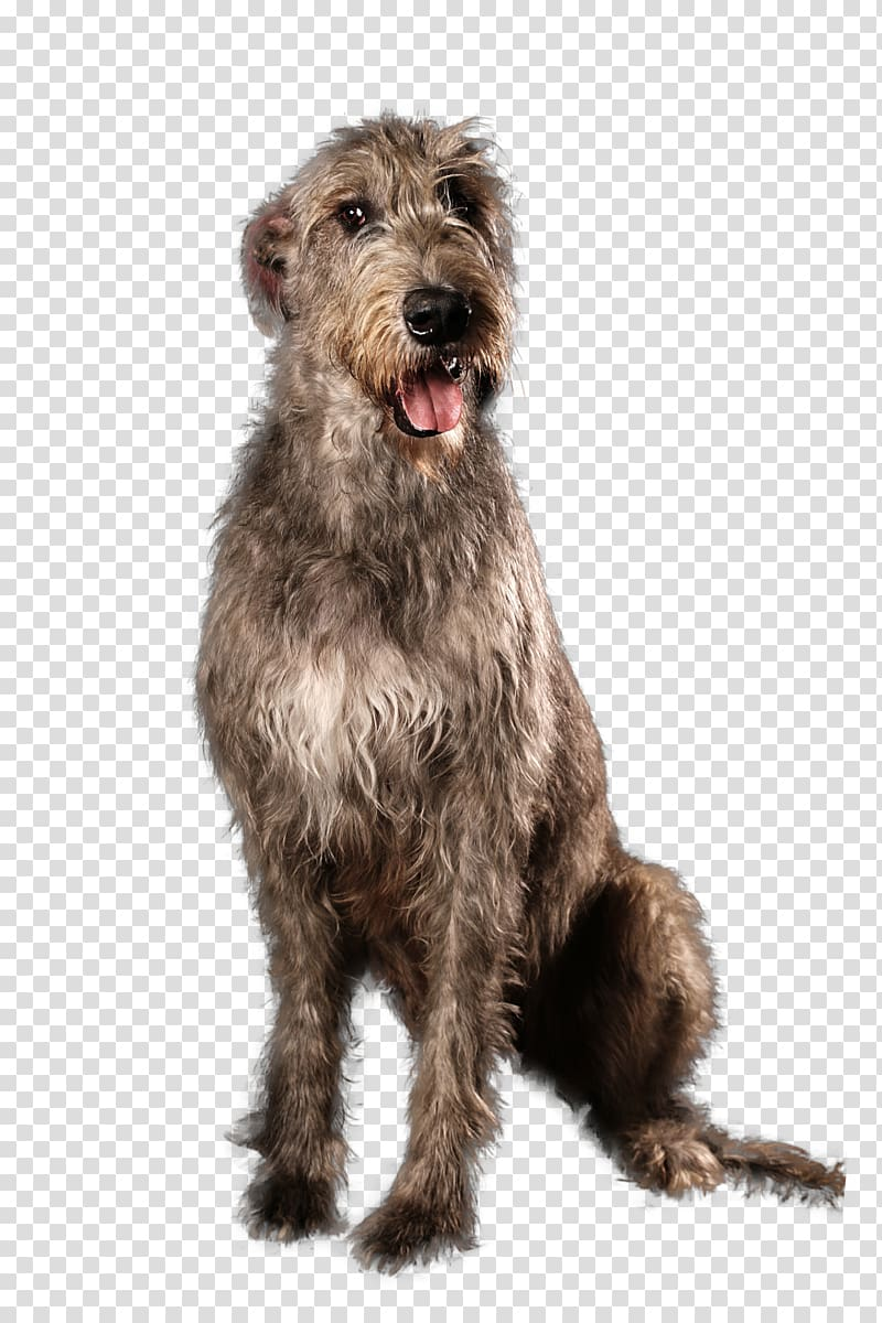 Irish Terrier Irish Wolfhound Scottish Deerhound Glen Pumi.