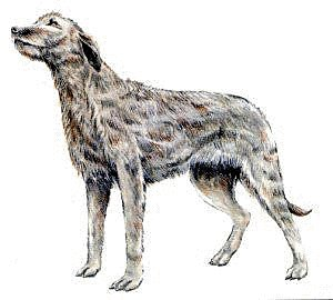 Irish Wolfhound Clipart.