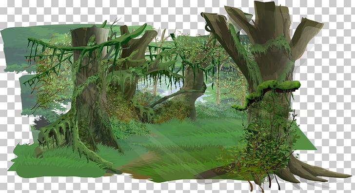 Jungle Euclidean , Jungle woods, forest PNG clipart.
