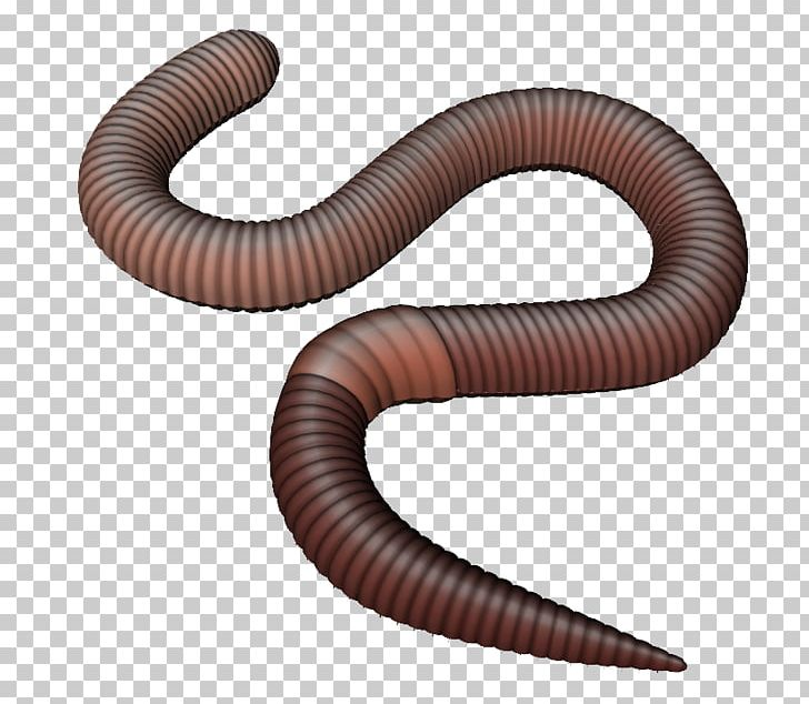 Worms PNG, Clipart, Worms Free PNG Download.