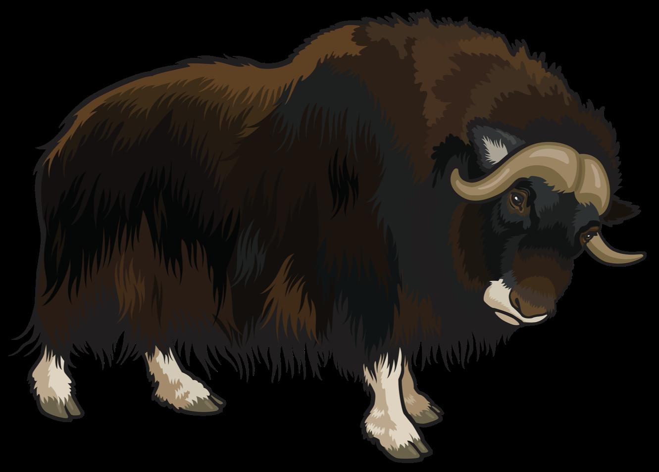 Domestic yak Clip art.