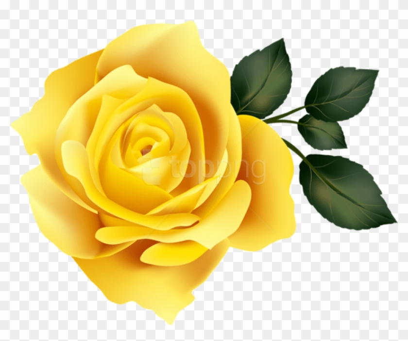 Free Png Download Yellow Rose Png Images Background.