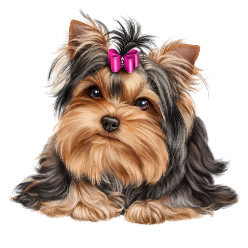 Clipart puppy yorkie, Picture #637471 clipart puppy yorkie.
