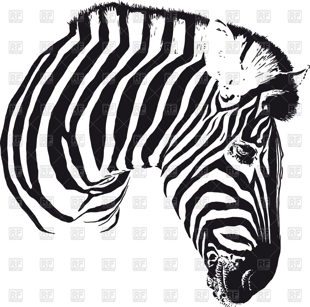 Painted black stripes zebra head turned in profile Stock Vector Image.