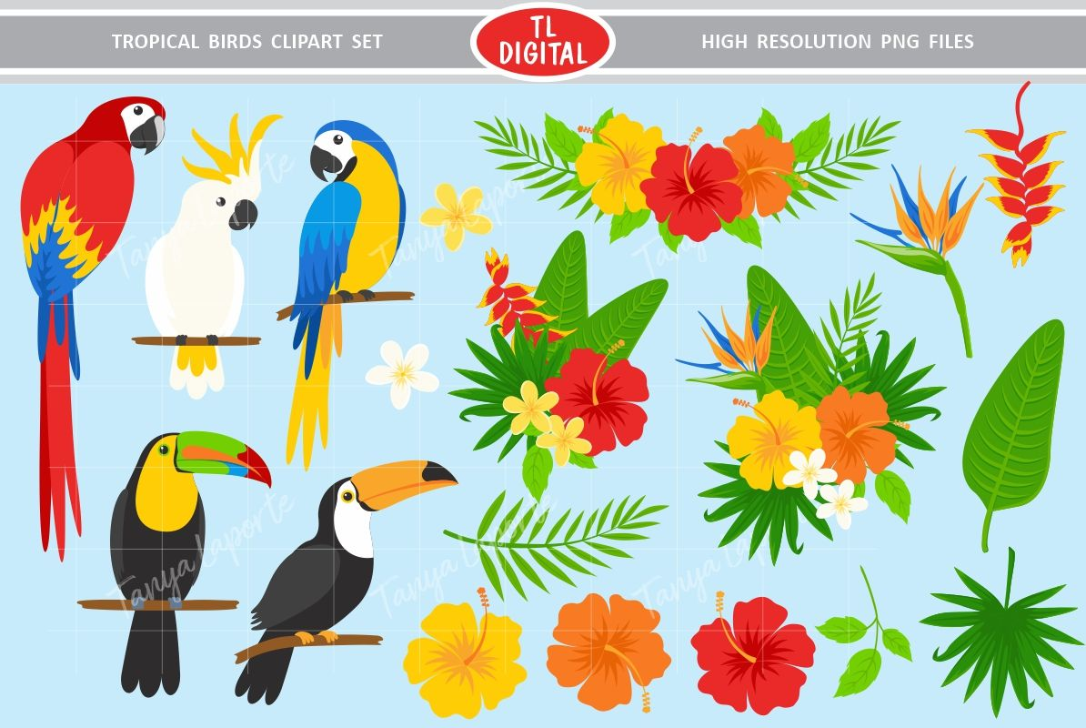 Tropical Birds and Flowers Clipart Set.