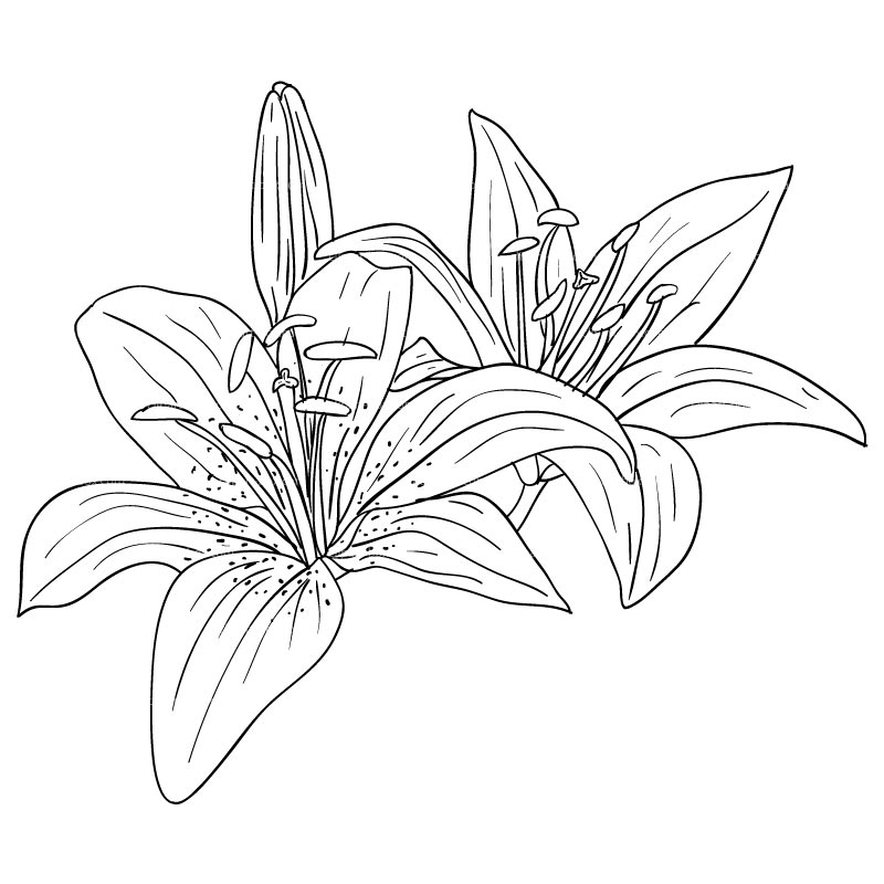 CLIPART FLOWERS SKETCH STYLE.