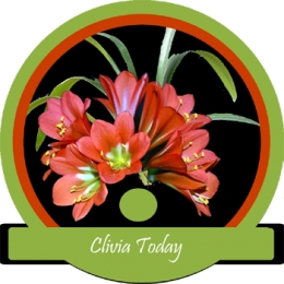 Clivia Today.