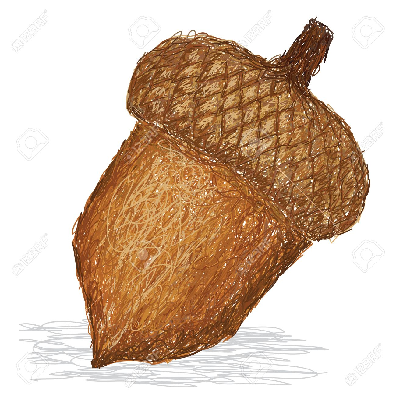 Closeup Illustration Of Acorn Nut. Royalty Free Cliparts, Vectors.