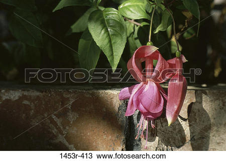 Stock Photo of leaves, hanging, flowers, nature, blooming.