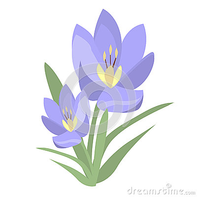 Early Spring Purple Crocus And Snowdrops Nature Beauty Flowers.