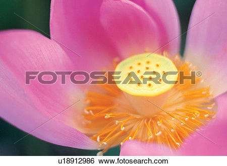 Stock Images of close.