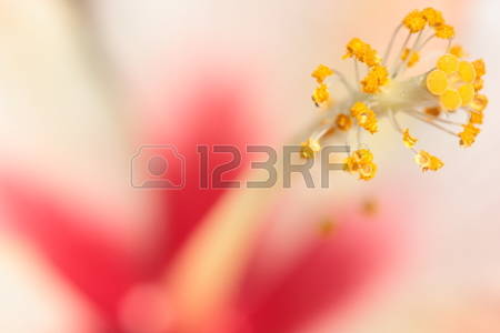 3,823 And The Stamens Stock Illustrations, Cliparts And Royalty.