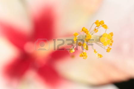 Stamens Stock Illustrations, Cliparts And Royalty Free Stamens Vectors.