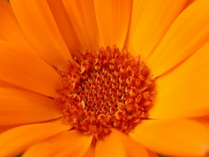 Free Daisy Photo Pictures.