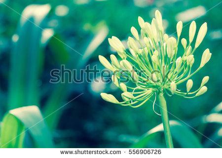 Flower Close Up Stock Photos, Royalty.