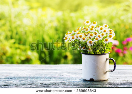 Garden Stock Images, Royalty.