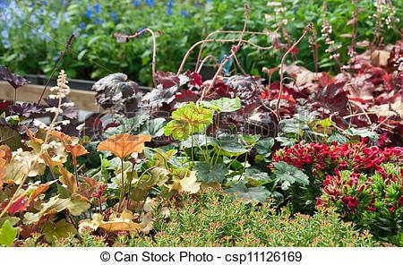 Stock Image of Colorful summer garden.