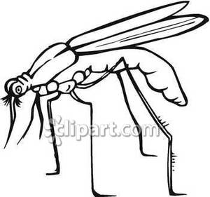 up View of a Mosquito Royalty Free Clipart Picture.