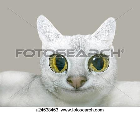 Drawing of White Cat Looking at Camera, Front View, CG, Close Up.