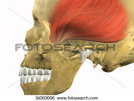 Stock Illustration of Lateral close.