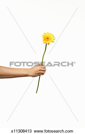 Stock Photo of Person holding yellow gerber flower, side view.