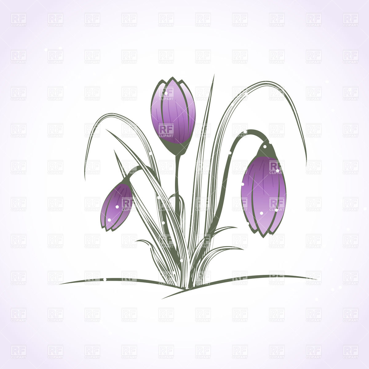 Crocus flower with closed buds in snow Vector Image #24513.