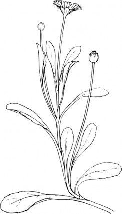 Crocus Closed Flower Clip Art Download.
