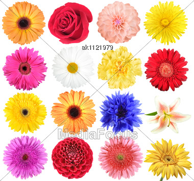 Stock Photo Set Of Flowers Close.