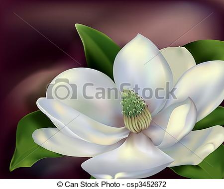 Clip Art of Magnolia Flower.