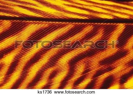 Stock Images of Patterns Of Nature, Abstracts, Animal, Backgrounds.