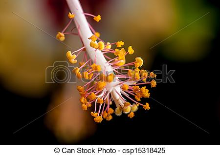 Clip Art of Close up red white hibiscus flower, pollen sacks.