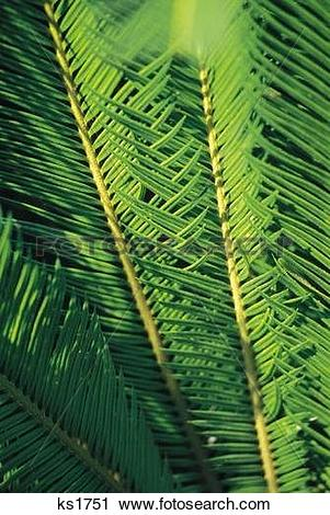 Stock Photography of Patterns Of Nature, Backgrounds, Close.