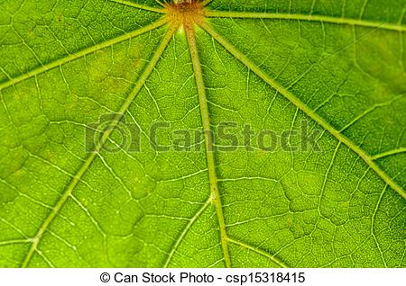 Clipart of Leaf pattern, green, veins, backlit, nature, fresh.